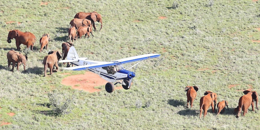 Using Aircraft For Wildlife Conservation: 5 Things We Look Out For From The Skies