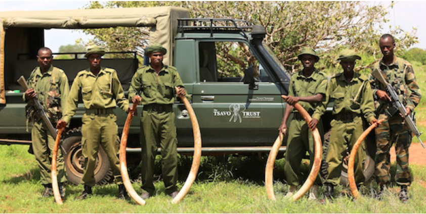 The Tsavo Trust And Conservation In The Era Of The Coronavirus