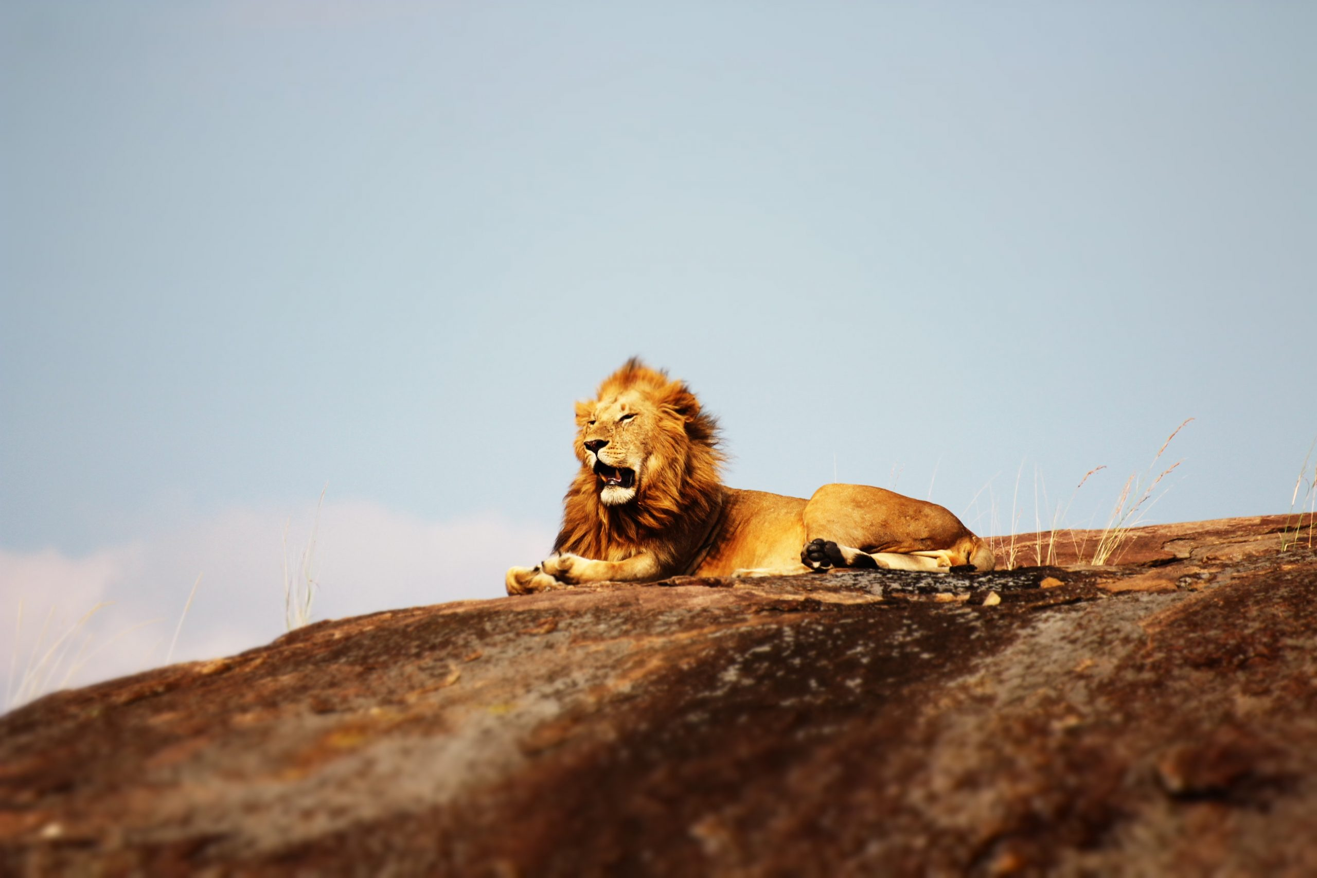 Where Are The Best Places To See The Big Five In Kenya?