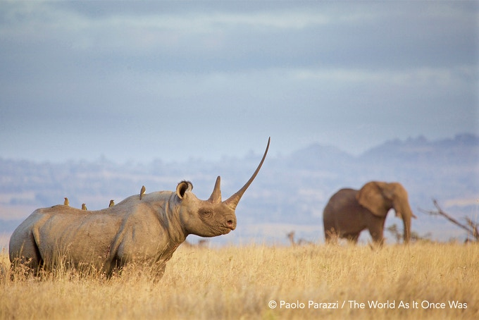 Theworldasitoncewas Rhino + Ellie