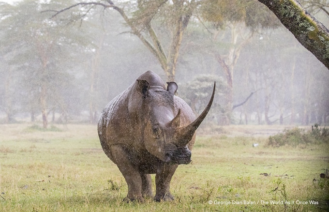 Theworldasitoncewas Rhino