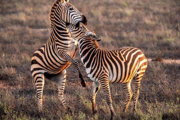 Wildlife Conservation Kenya Resize