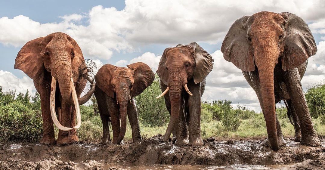 Elephant Society Conservation