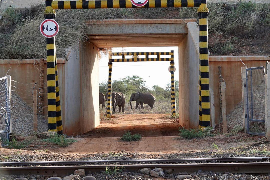 Elephant Wildlife Corridor