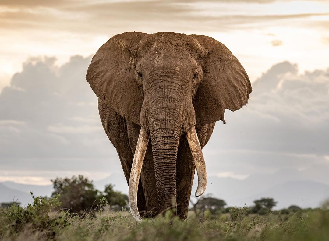 Elephant Naming Festival Conservation